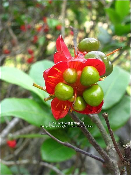 2011-0521-金谷農場 (15).jpg