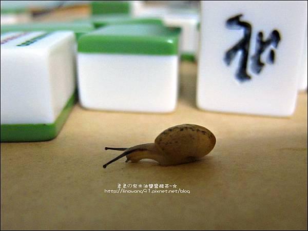 2011-0603-Yuki 3Y5M-蝸牛走迷宮 (1).jpg