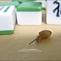 2011-0603-Yuki 3Y5M-蝸牛走迷宮 (2).jpg