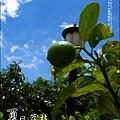 2011-0716-新竹-德聲觀光果園-採荔枝 (6).jpg