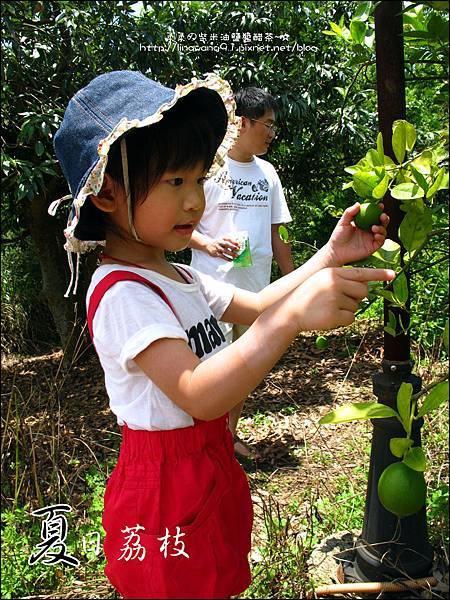 2011-0716-新竹-德聲觀光果園-採荔枝 (7).jpg