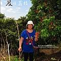 2011-0716-新竹-德聲觀光果園-採荔枝 (8).jpg