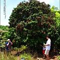 2011-0716-新竹-德聲觀光果園-採荔枝 (9).jpg