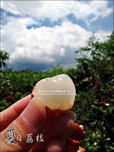 2011-0716-新竹-德聲觀光果園-採荔枝 (11).jpg