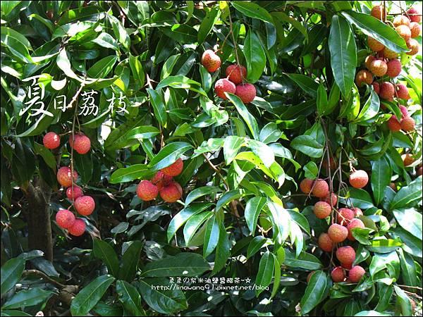 2011-0716-新竹-德聲觀光果園-採荔枝 (12).jpg