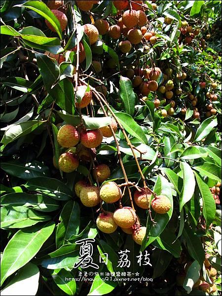 2011-0716-新竹-德聲觀光果園-採荔枝 (13).jpg