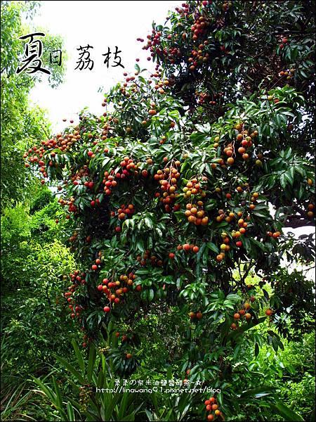 2011-0716-新竹-德聲觀光果園-採荔枝 (17).jpg