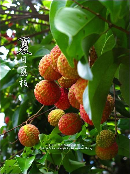 2011-0716-新竹-德聲觀光果園-採荔枝 (20).jpg