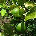 2011-0716-新竹-德聲觀光果園-採荔枝 (21).jpg
