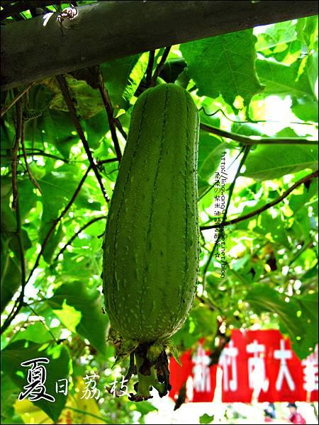 2011-0716-新竹-德聲觀光果園-採荔枝 (32).jpg