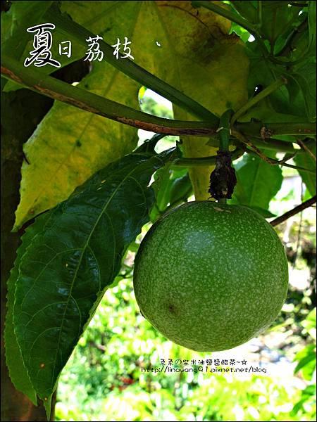 2011-0716-新竹-德聲觀光果園-採荔枝 (34).jpg