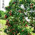 2011-0716-新竹-德聲觀光果園-採荔枝 (38).jpg