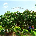 2011-0716-新竹-德聲觀光果園-採荔枝 (41).jpg