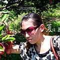 2011-0716-新竹-德聲觀光果園-採荔枝 (45).jpg