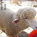 2010-1212 -南投-清境農場-青青草原 (5).jpg