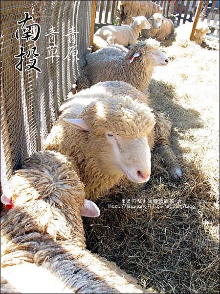 2010-1212 -南投-清境農場-青青草原 (7).jpg