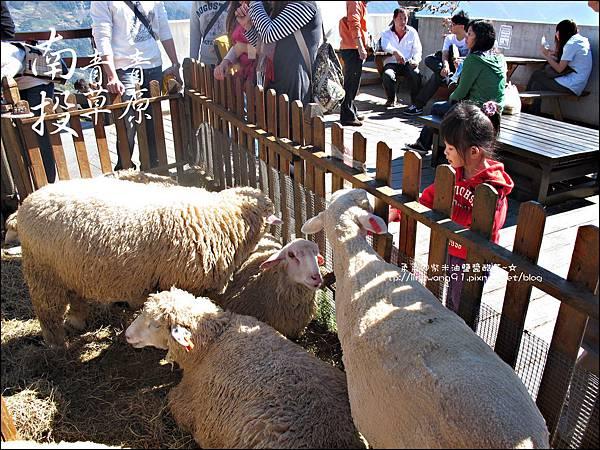 2010-1212 -南投-清境農場-青青草原 (10).jpg