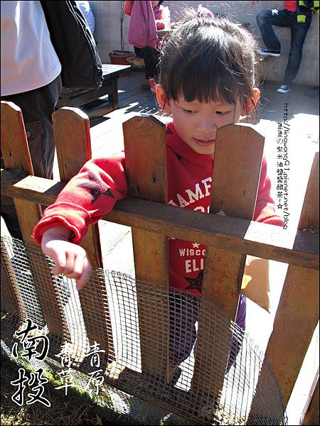 2010-1212 -南投-清境農場-青青草原 (11).jpg