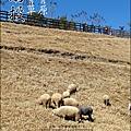 2010-1212 -南投-清境農場-青青草原 (13).jpg
