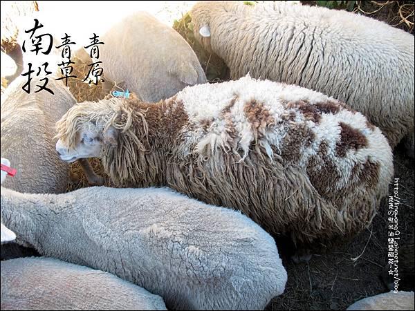 2010-1212 -南投-清境農場-青青草原 (14).jpg