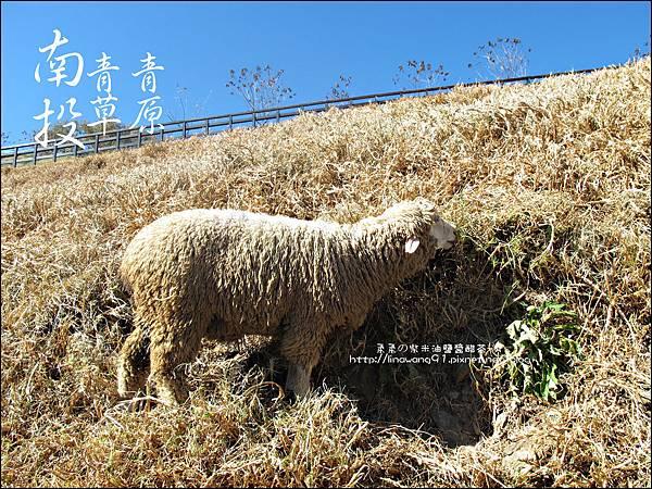 2010-1212 -南投-清境農場-青青草原 (15).jpg