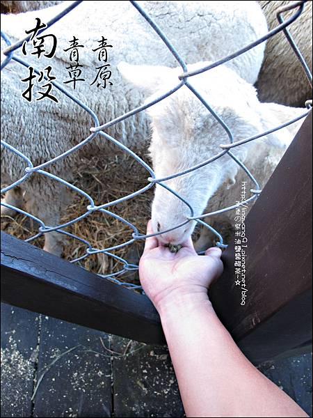 2010-1212 -南投-清境農場-青青草原 (16).jpg