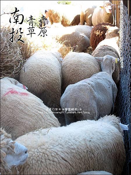 2010-1212 -南投-清境農場-青青草原 (18).jpg