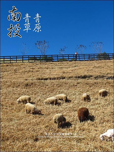 2010-1212 -南投-清境農場-青青草原 (20).jpg