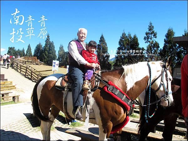 2010-1212 -南投-清境農場-青青草原 (26).jpg