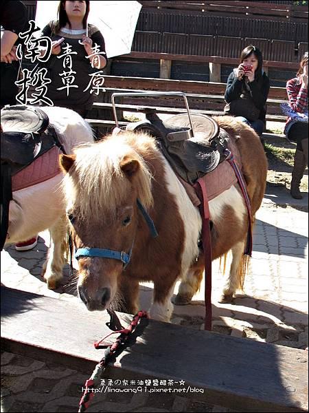 2010-1212 -南投-清境農場-青青草原 (31).jpg