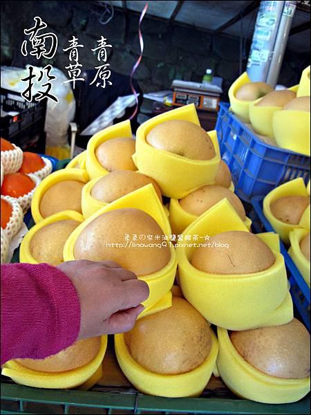 2010-1212 -南投-清境農場-青青草原 (38).jpg