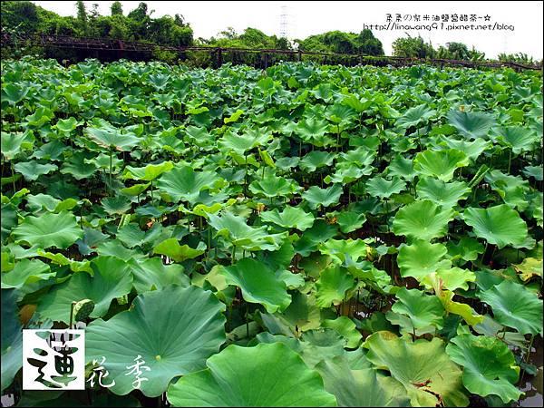 2011-0729-桃園觀音-大田蓮花餐廳 (22).jpg