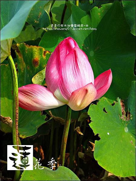 2011-0729-桃園觀音-大田蓮花餐廳 (27).jpg