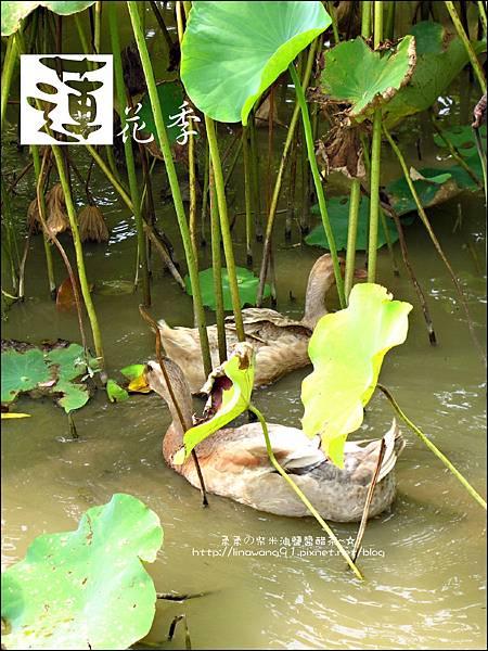 2011-0729-桃園觀音-大田蓮花餐廳 (35).jpg