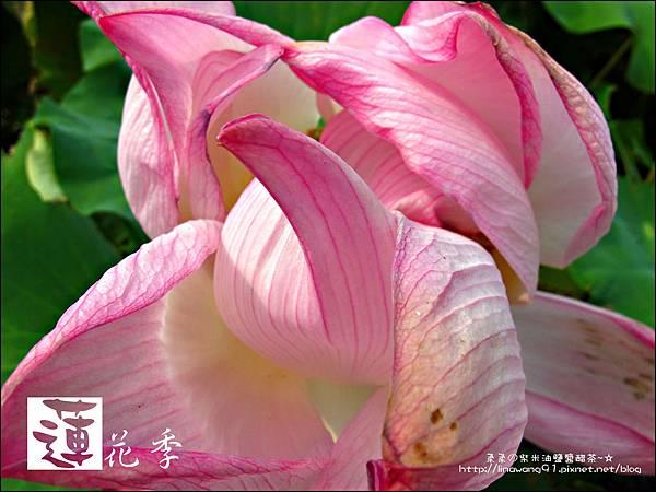 2011-0729-桃園觀音-大田蓮花餐廳 (37).jpg