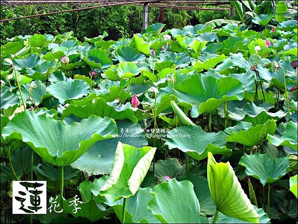 2011-0729-桃園觀音-大田蓮花餐廳 (43).jpg