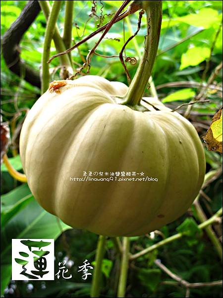 2011-0729-桃園-觀音-林家古厝 (9).jpg