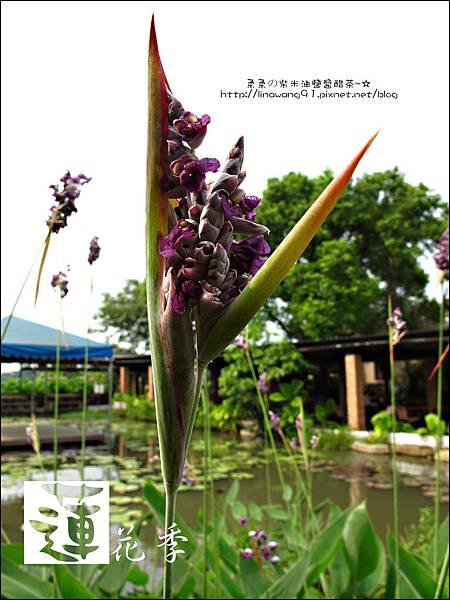 2011-0729-桃園-觀音-林家古厝 (16).jpg