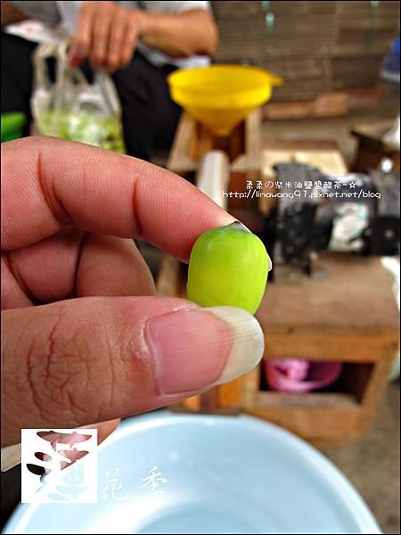 2011-0729-桃園-觀音-林家古厝 (33).jpg