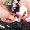 2011-0813-苗栗海洋觀光季-竹南-龍鳳漁港 (13).jpg