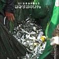 2011-0813-苗栗海洋觀光季-竹南-龍鳳漁港 (14).jpg