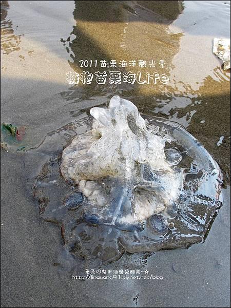 2011-0813-苗栗海洋觀光季-竹南-龍鳳漁港 (17).jpg