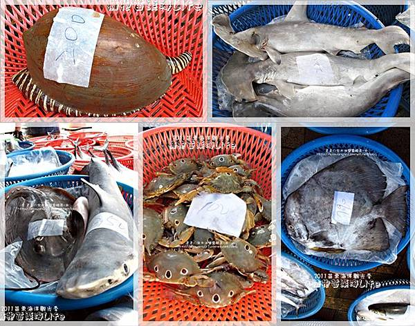 2011-0813-苗栗海洋觀光季-竹南-龍鳳漁港 (46).jpg