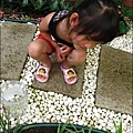 2011-0806-花園裡的螳螂 (2).jpg
