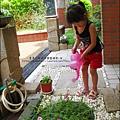 2011-0806-花園裡的螳螂 (3).jpg