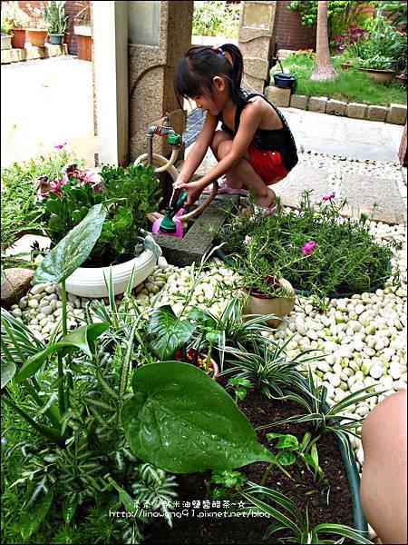 2011-0806-花園裡的螳螂 (6).jpg