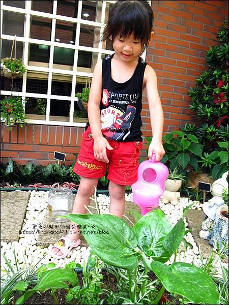 2011-0806-花園裡的螳螂 (8).jpg