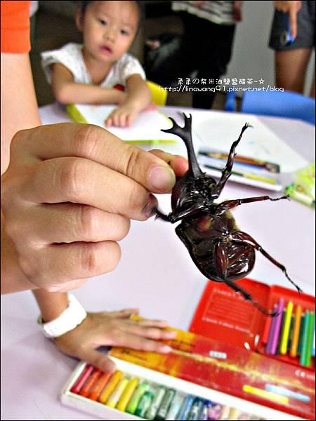 2011-0802-昆蟲課-昆蟲老師-吳沁婕 (8).jpg