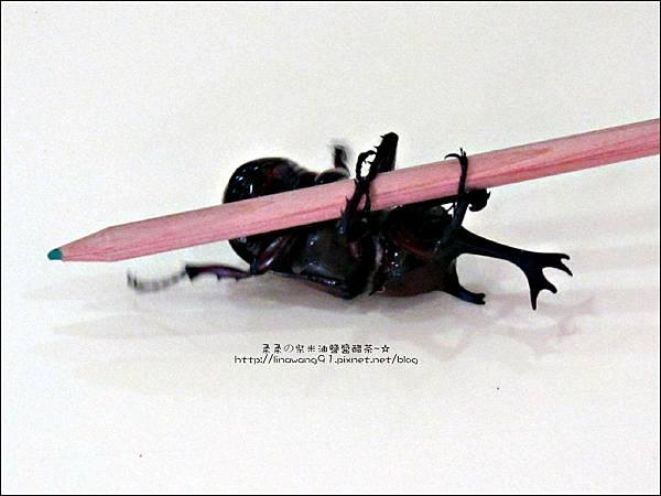 2011-0802-昆蟲課-昆蟲老師-吳沁婕 (10).jpg