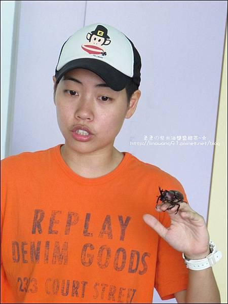 2011-0802-昆蟲課-昆蟲老師-吳沁婕 (11).jpg